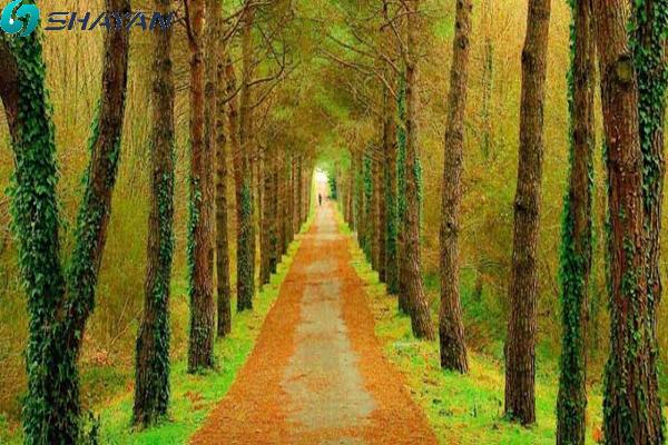 پارک جنگلی بلگراد